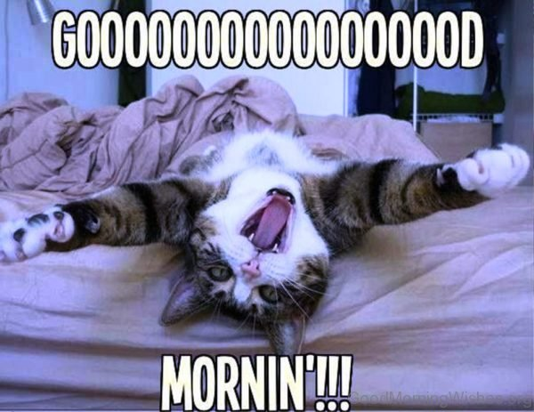 Good Morning With Funny Cat