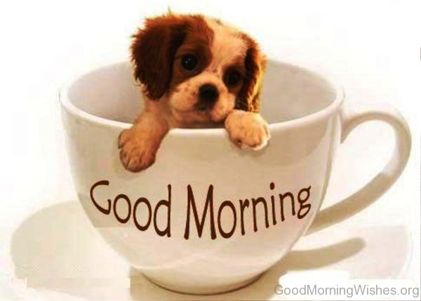 Good Morning With Sweet Little Puppy