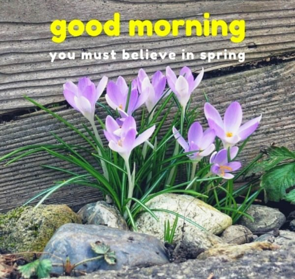 Good Morning You Must Believe In Spring