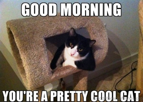 Good Morning Youre A Pretty Cool Cat