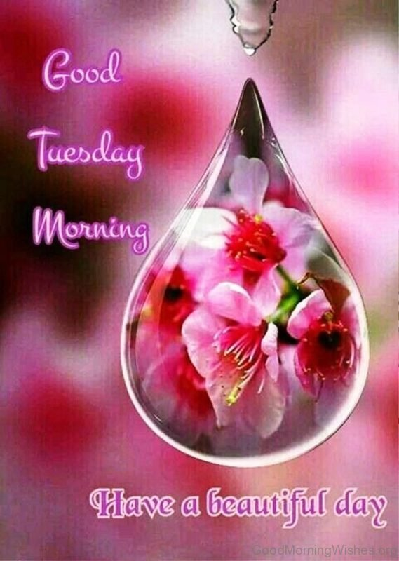 Good Tuesday Morning Have A Beautiful Day