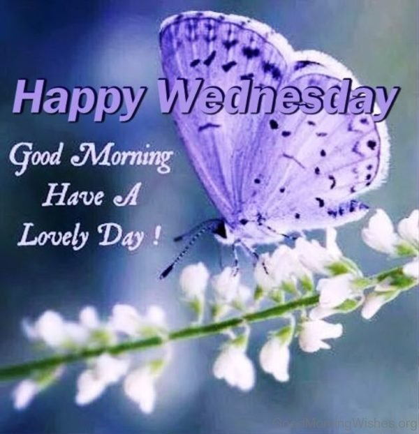 Happy wednesday good Morning have a lovely day