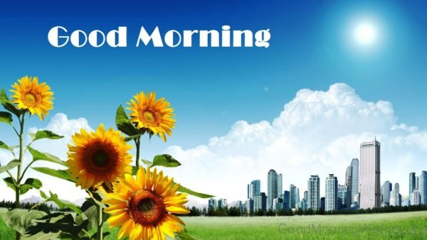 Image Of Good Morning Sunflowers