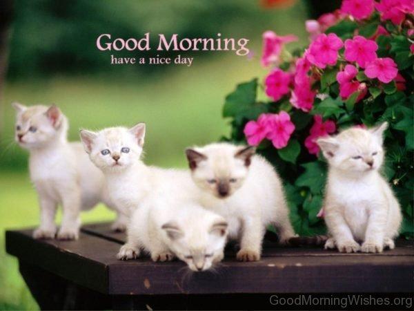 Lovely Good Morning Image