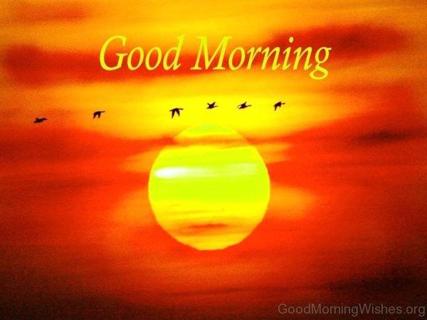 Lovely Good Morning Pic 3