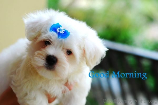 Lovely Good Morning Puppy Pic