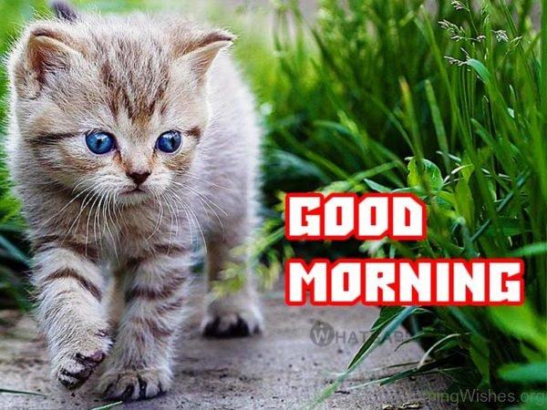 Lovely Image Of Good Morning