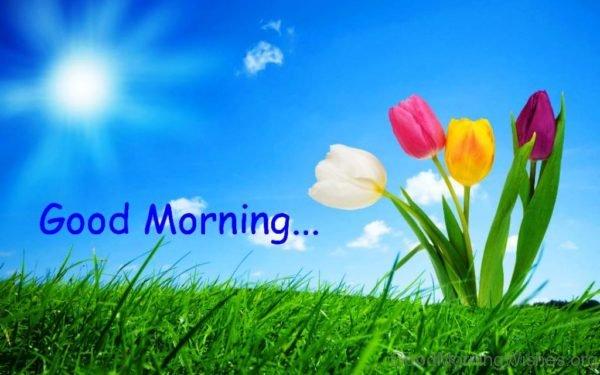Lovely Pic Of Good Morning 16