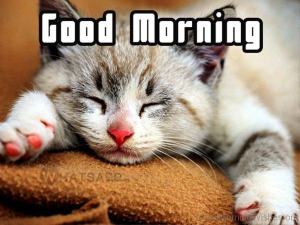 Lovely Pic Of Good Morning 2