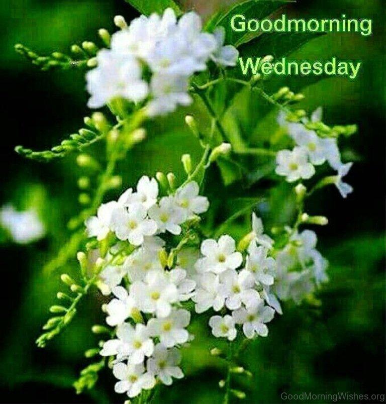 Good Morning Wednesday Image : Good morning wishes on wednesday
