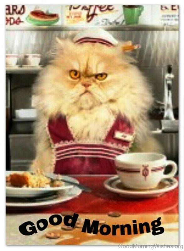 Nice Good Morning Cat Pic