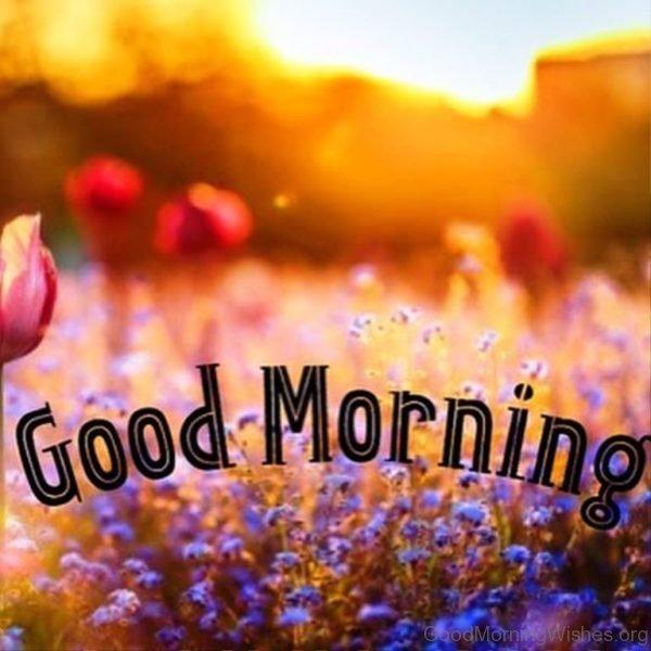 Nice Pic Of Good Morning Sunrise