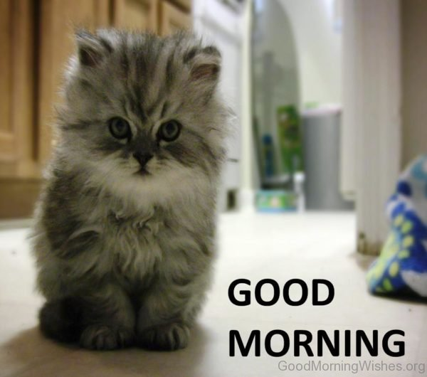 Photo Of Good Morning Cat