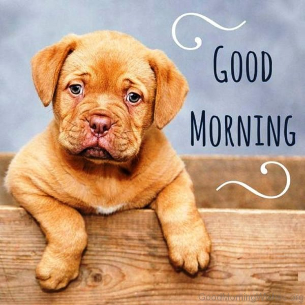 Picture Of Good Morning Puppy