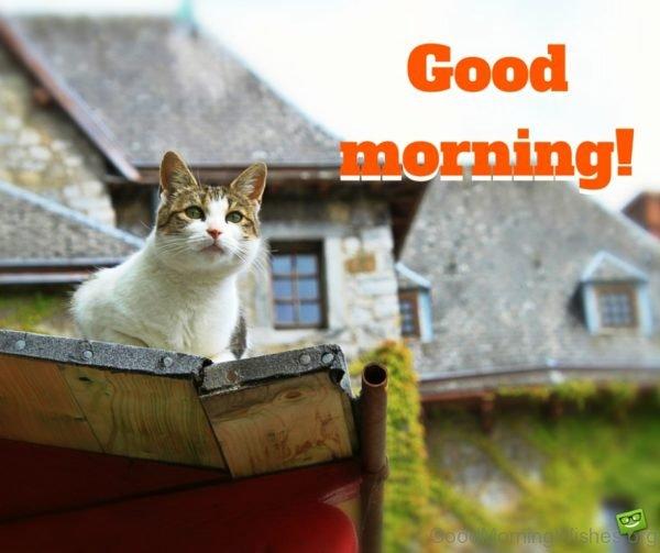 Stunning Good Morning Cat Pic