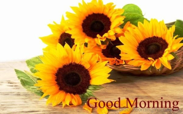 Sweet Good Morning Sunflowers Pic
