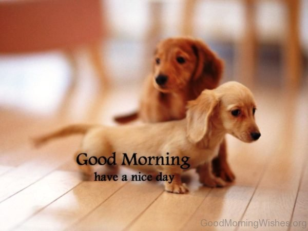Sweet Pic Of Good Morning Puppy