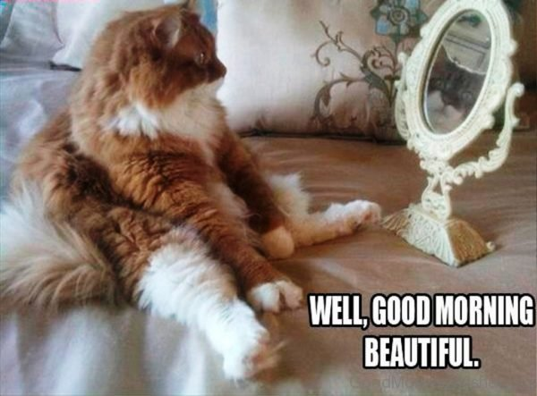 Well Good Morning Beautiful