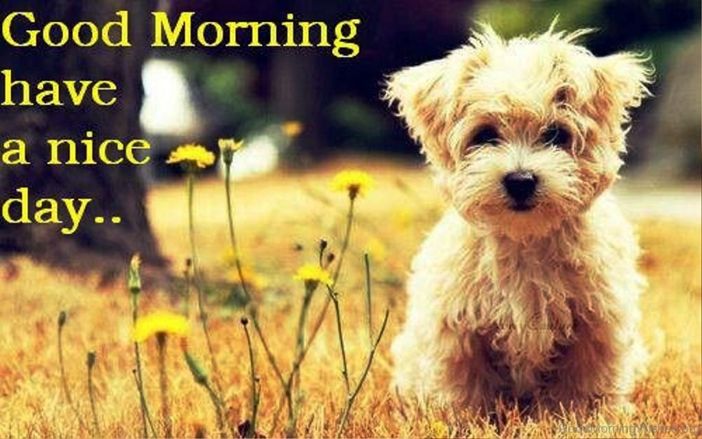 57 good morning wishes for puppy lovers wonderful pic of good morning 6 m4hsunfo