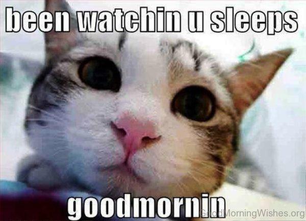 Cat humor good morning